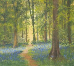 Bluebell Forest : An original pastel by landscape artist Sue Thomas