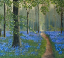 Bluebell Wood : An original pastel by landscape artist Sue Thomas